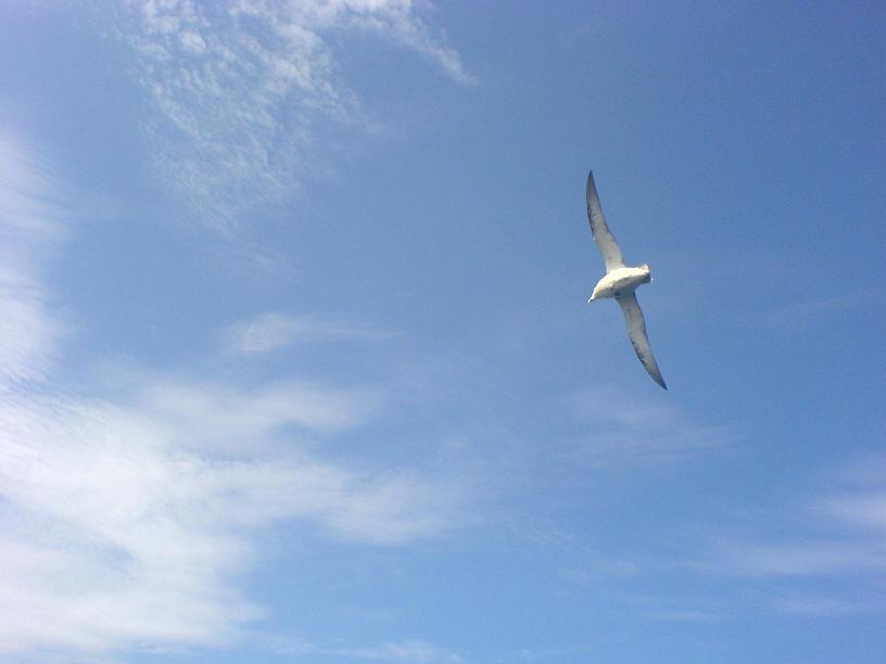Морской пейзаж, небо, чайка.